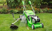 Как вырастить газон в июле