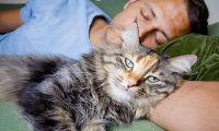 Усыпление больных кошек: гуманность или убийство