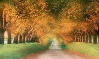 Осенний отпуск