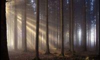 Фото: красивые Алтайские леса