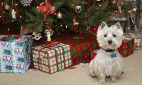 Каким должен быть подарок на Новый Год?