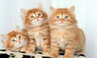 Новый член семьи - котёнок