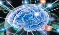 Натренировать мозг возможно!