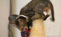 Когтеточки для кошек - как необходимость
