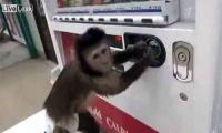 Обезьянка в Японии научилась пользоваться автоматом с газировкой