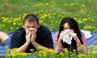 Три главных мифа о весенней аллергии