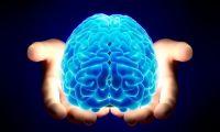 Учёные вырастили искусственный мозг человека (ВИДЕО)