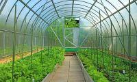 Парники – помощники в борьбе за урожай